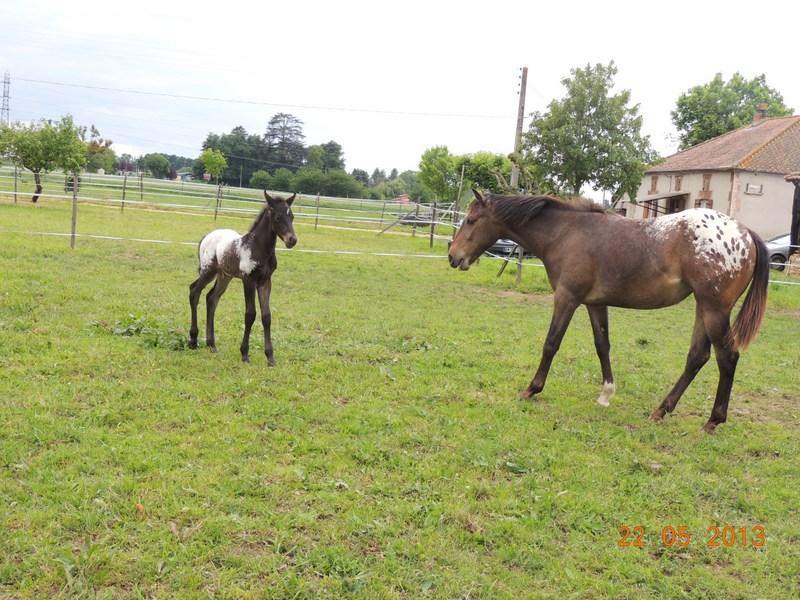 Mes chevaux, un mélange d'un peu tout le monde! - Page 5 Dodge_20