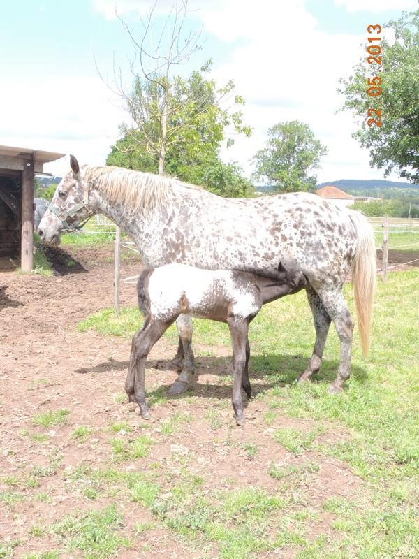 Mes chevaux, un mélange d'un peu tout le monde! - Page 5 Dodge_21