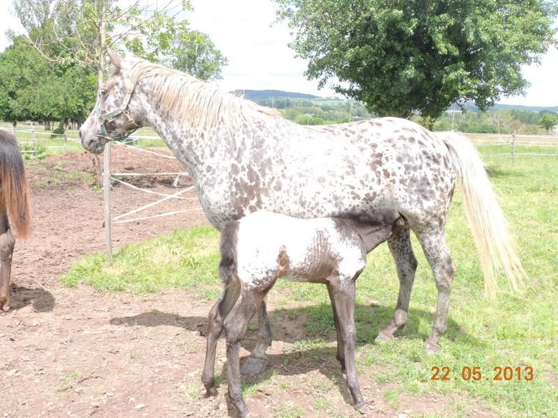 Mes chevaux, un mélange d'un peu tout le monde! - Page 5 Dodge_22