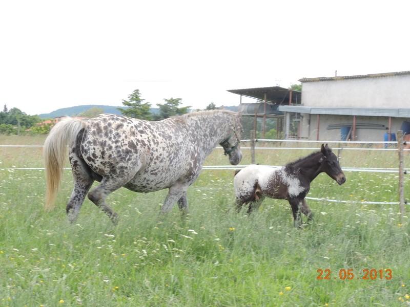 Mes chevaux, un mélange d'un peu tout le monde! - Page 5 Dodge_23