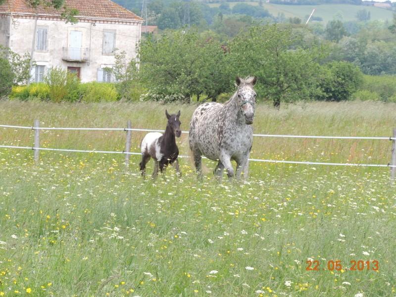 Mes chevaux, un mélange d'un peu tout le monde! - Page 5 Dodge_24