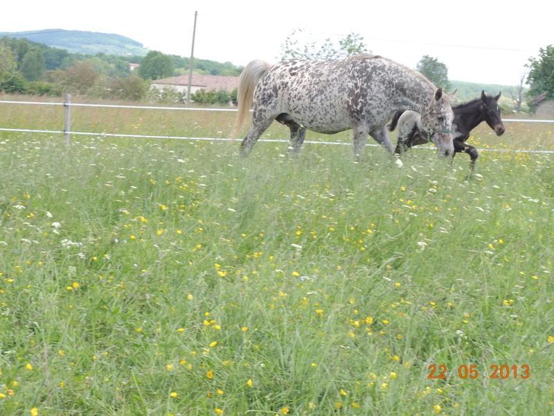 Mes chevaux, un mélange d'un peu tout le monde! - Page 5 Dodge_25