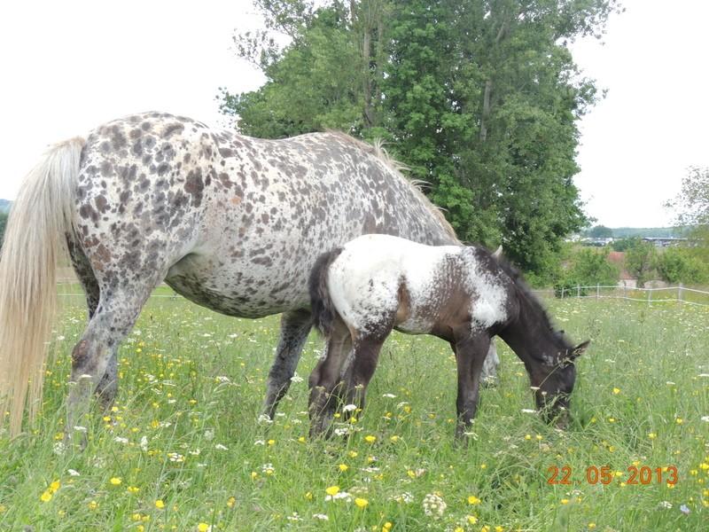 Mes chevaux, un mélange d'un peu tout le monde! - Page 5 Dodge_27