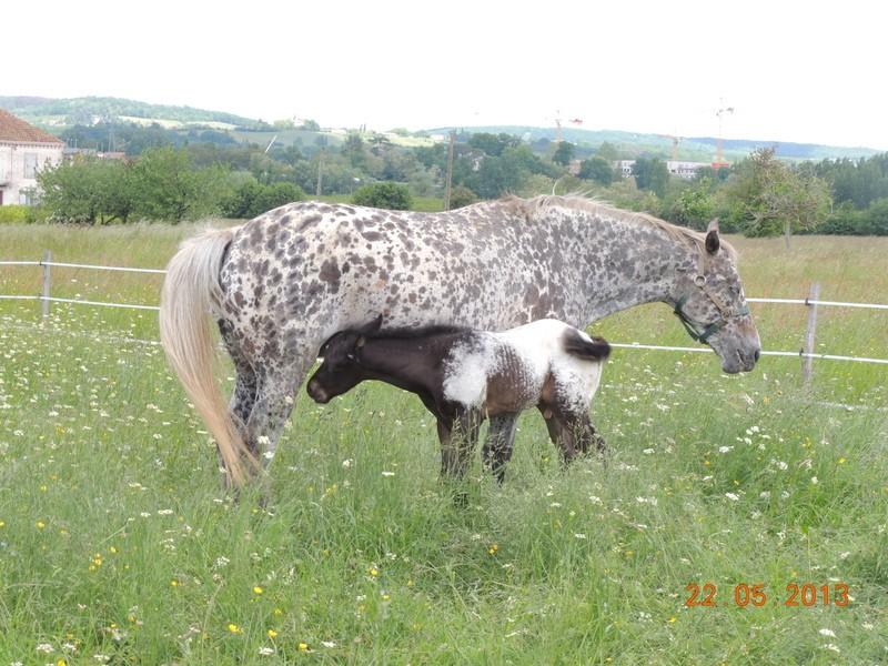 Mes chevaux, un mélange d'un peu tout le monde! - Page 5 Dodge_29
