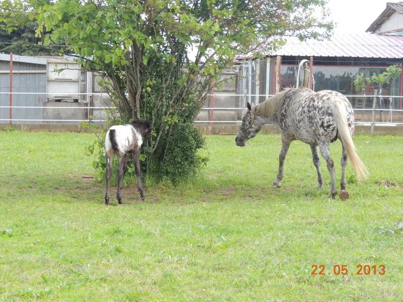 Mes chevaux, un mélange d'un peu tout le monde! - Page 5 Dodge_32
