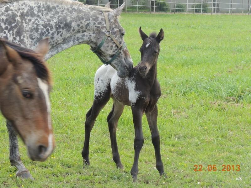 Mes chevaux, un mélange d'un peu tout le monde! - Page 5 Dodge_33