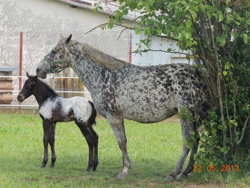 Mes chevaux, un mélange d'un peu tout le monde! - Page 5 Dodge_34