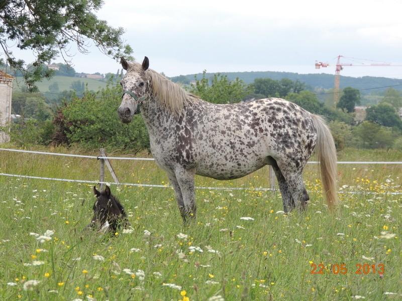 Mes chevaux, un mélange d'un peu tout le monde! - Page 5 Dodge_35