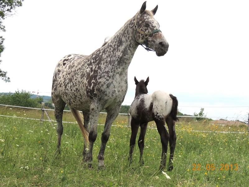 Mes chevaux, un mélange d'un peu tout le monde! - Page 5 Dodge_37