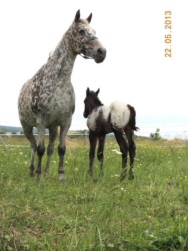 Mes chevaux, un mélange d'un peu tout le monde! - Page 5 Dodge_38