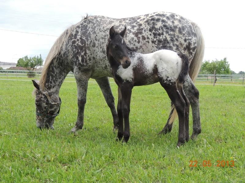 Mes chevaux, un mélange d'un peu tout le monde! - Page 5 Dodge_39