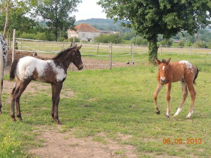 Mes chevaux, un mélange d'un peu tout le monde! - Page 6 Dodge_95