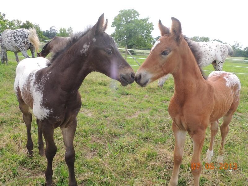 Mes chevaux, un mélange d'un peu tout le monde! - Page 6 Dodge_96