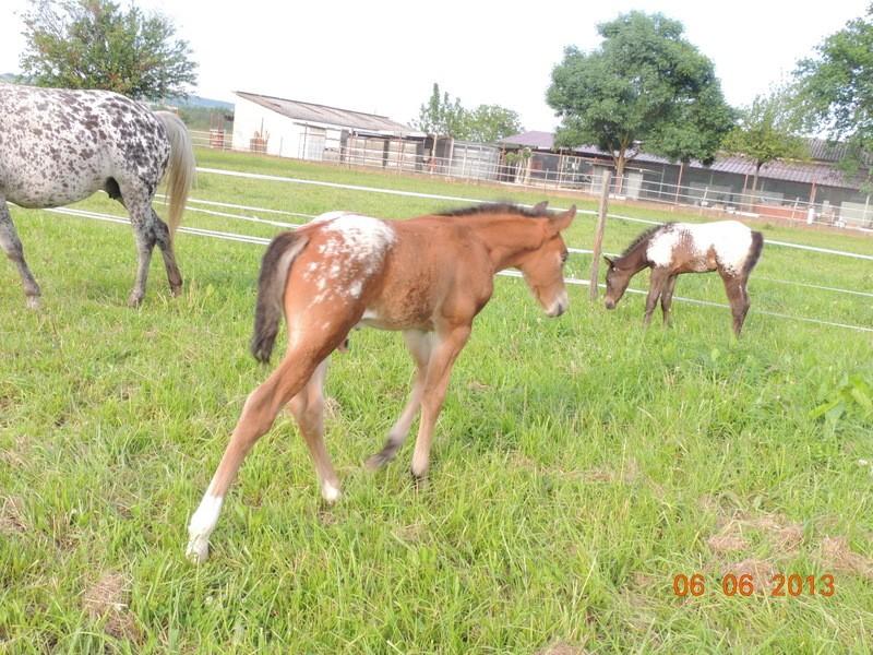 Mes chevaux, un mélange d'un peu tout le monde! - Page 6 Dynami56