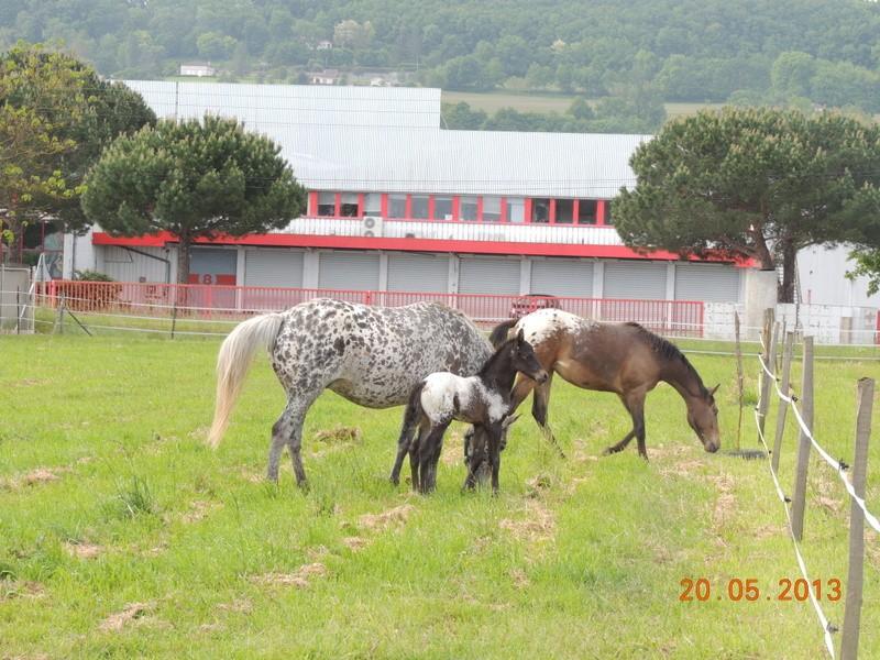 Mes chevaux, un mélange d'un peu tout le monde! - Page 5 Groupe10
