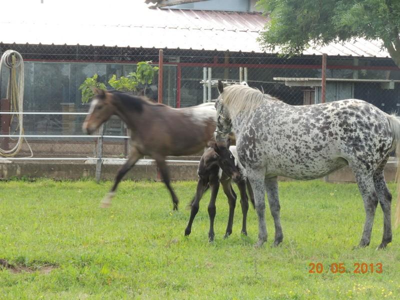Mes chevaux, un mélange d'un peu tout le monde! - Page 5 Groupe11