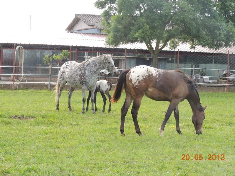 Mes chevaux, un mélange d'un peu tout le monde! - Page 5 Groupe12