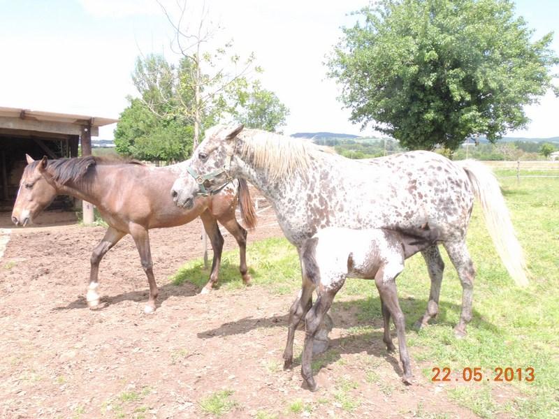 Mes chevaux, un mélange d'un peu tout le monde! - Page 5 Groupe13