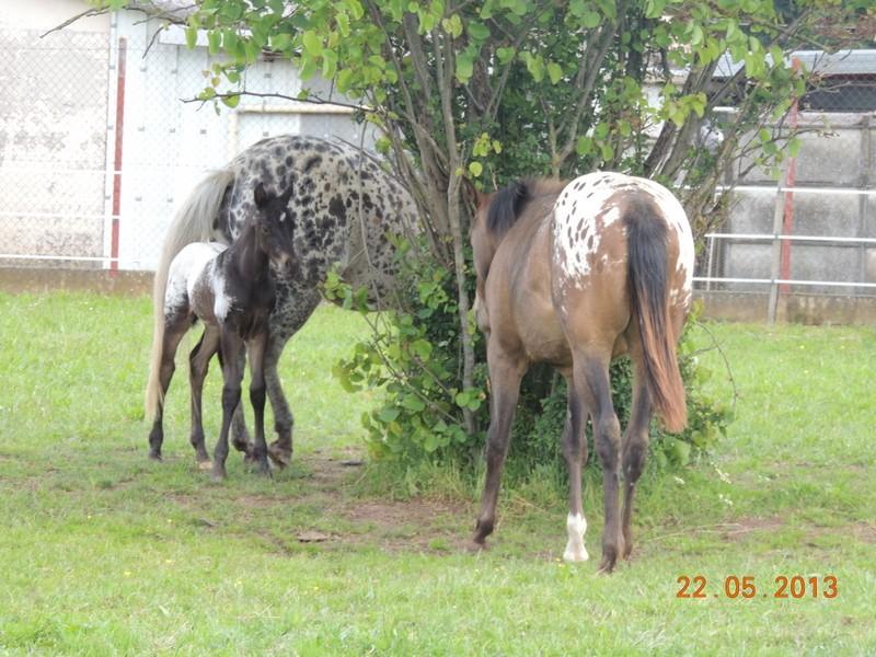 Mes chevaux, un mélange d'un peu tout le monde! - Page 5 Groupe14