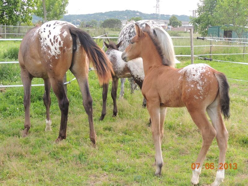Mes chevaux, un mélange d'un peu tout le monde! - Page 6 Groupe15
