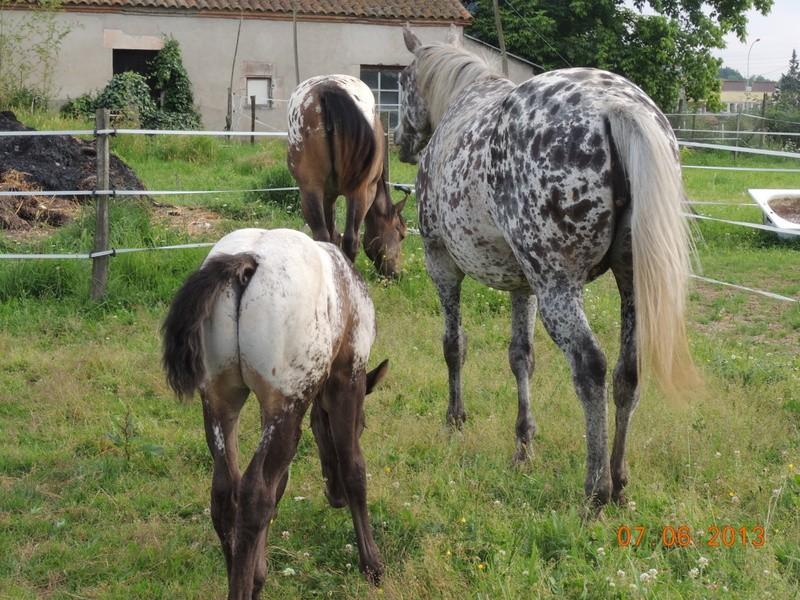 Mes chevaux, un mélange d'un peu tout le monde! - Page 6 Groupe16