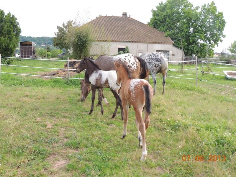 Mes chevaux, un mélange d'un peu tout le monde! - Page 6 Groupe17