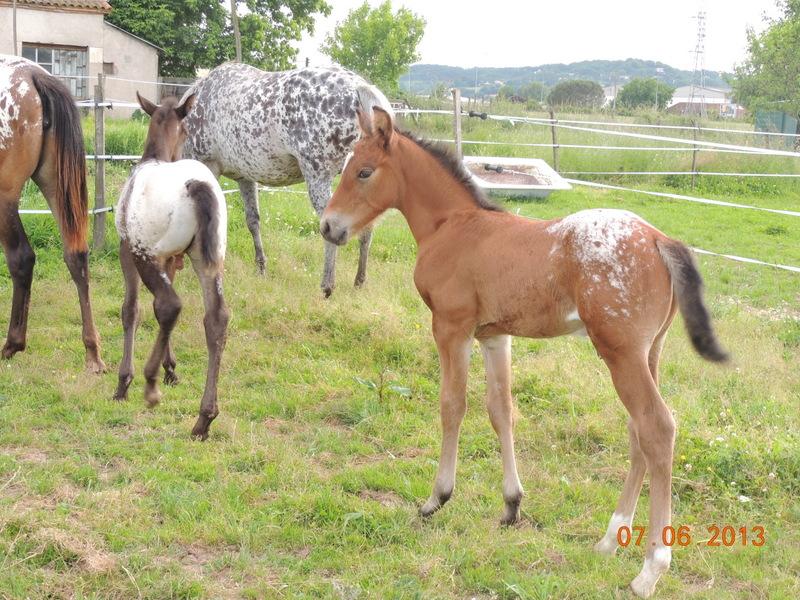 Mes chevaux, un mélange d'un peu tout le monde! - Page 6 Groupe18