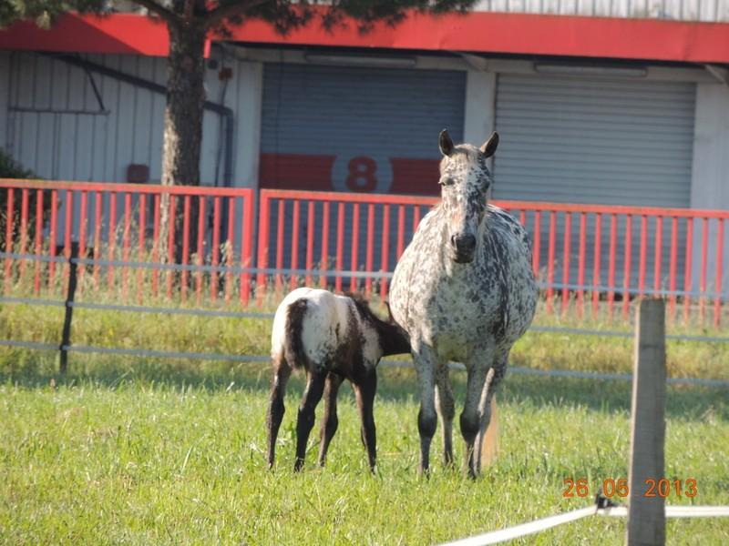 Mes chevaux, un mélange d'un peu tout le monde! - Page 6 Opium_25