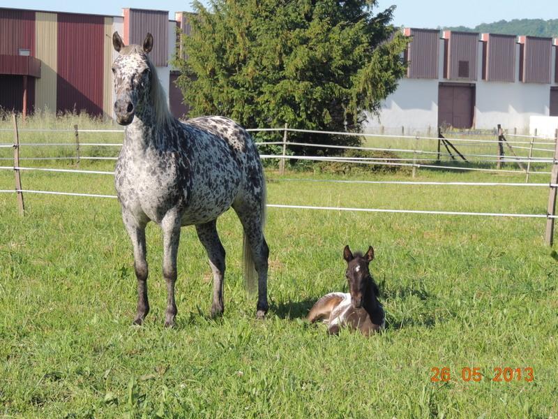 Mes chevaux, un mélange d'un peu tout le monde! - Page 6 Opium_26