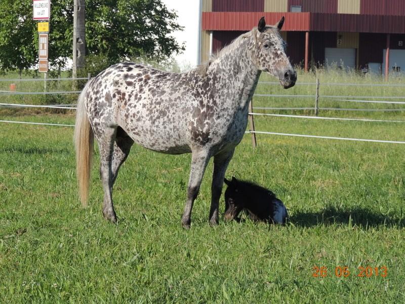 Mes chevaux, un mélange d'un peu tout le monde! - Page 6 Opium_27