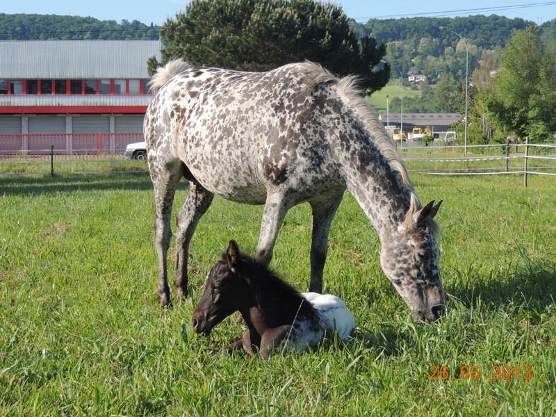 Mes chevaux, un mélange d'un peu tout le monde! - Page 6 Opium_28