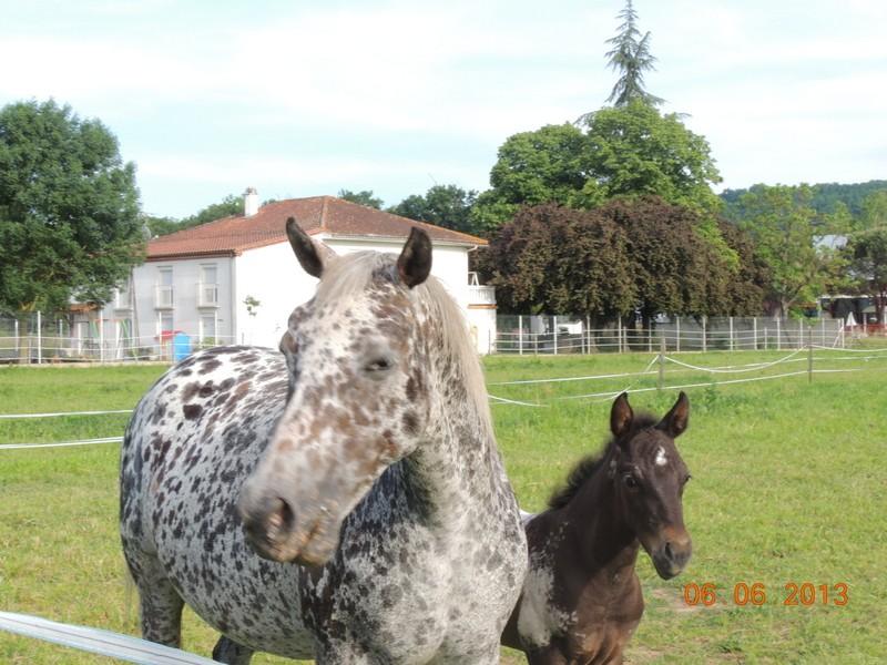 Mes chevaux, un mélange d'un peu tout le monde! - Page 6 Opium_29