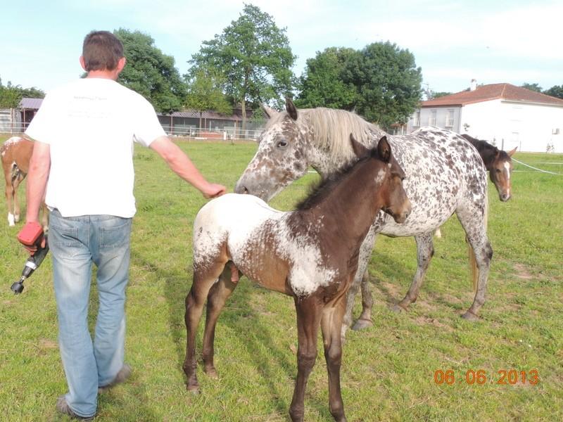 Mes chevaux, un mélange d'un peu tout le monde! - Page 6 Opium_30