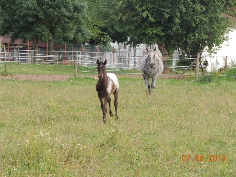 Mes chevaux, un mélange d'un peu tout le monde! - Page 6 Opium_31