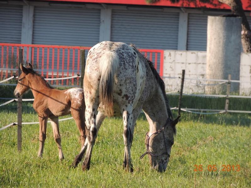 Mes chevaux, un mélange d'un peu tout le monde! - Page 6 Quarin31