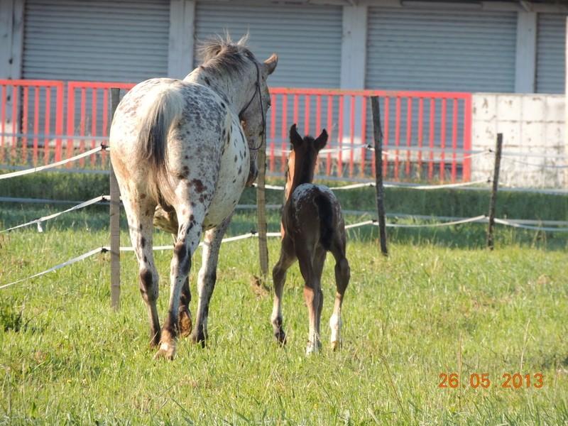 Mes chevaux, un mélange d'un peu tout le monde! - Page 6 Quarin32