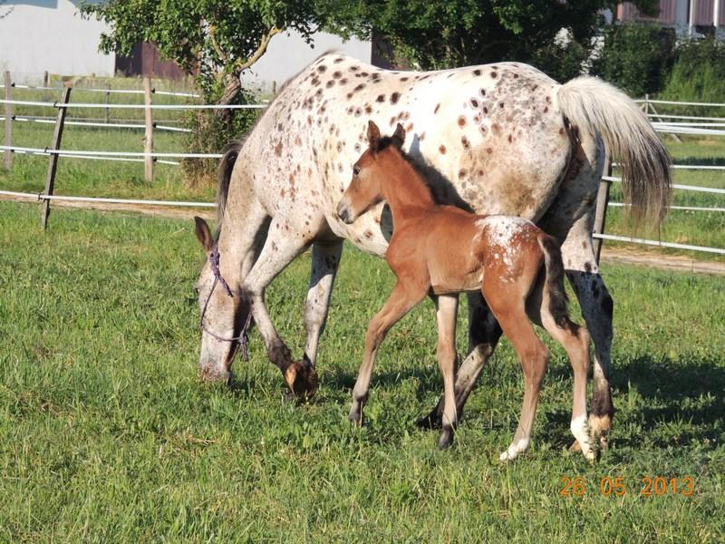 Mes chevaux, un mélange d'un peu tout le monde! - Page 6 Quarin34