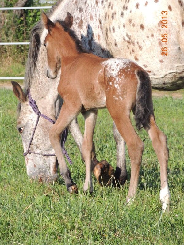 Mes chevaux, un mélange d'un peu tout le monde! - Page 6 Quarin35