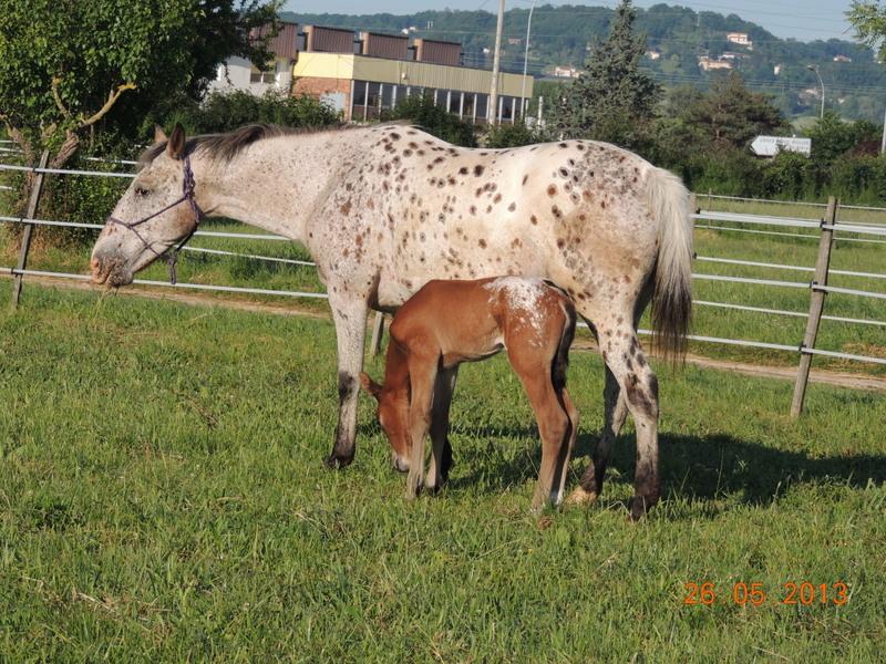 Mes chevaux, un mélange d'un peu tout le monde! - Page 6 Quarin36