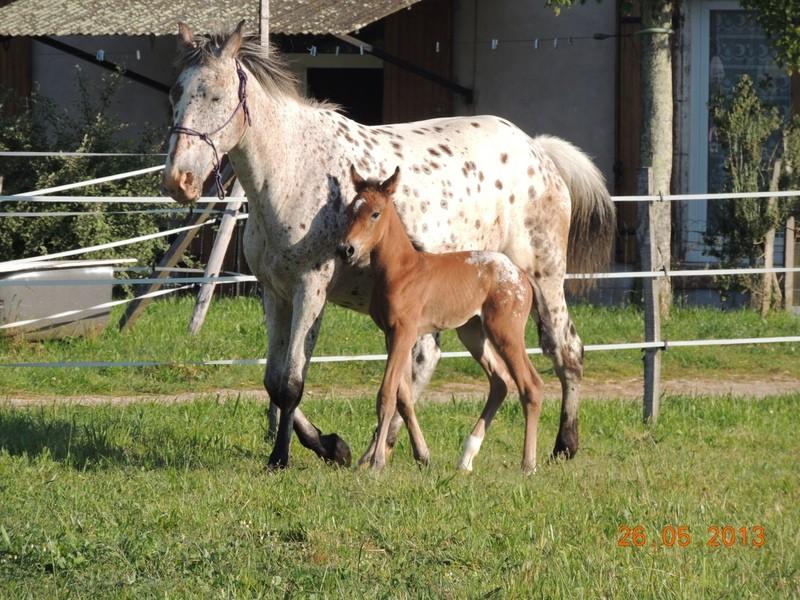 Mes chevaux, un mélange d'un peu tout le monde! - Page 6 Quarin37