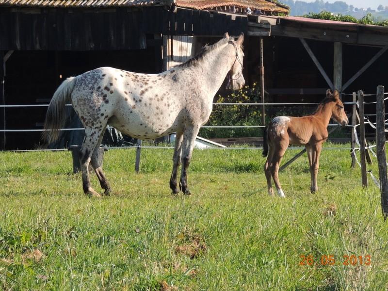 Mes chevaux, un mélange d'un peu tout le monde! - Page 6 Quarin38