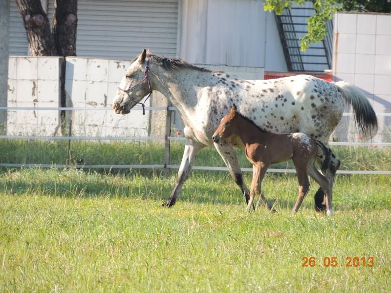 Mes chevaux, un mélange d'un peu tout le monde! - Page 6 Quarin39