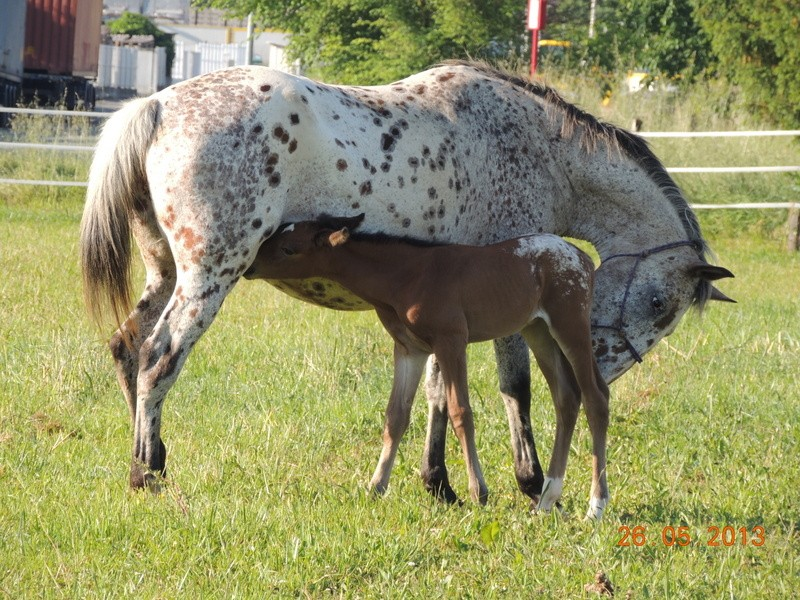 Mes chevaux, un mélange d'un peu tout le monde! - Page 6 Quarin40