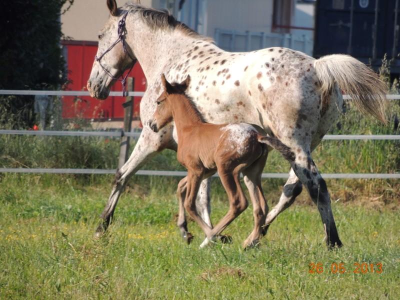 Mes chevaux, un mélange d'un peu tout le monde! - Page 6 Quarin41
