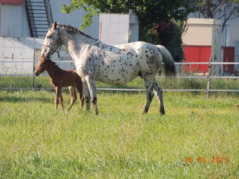 Mes chevaux, un mélange d'un peu tout le monde! - Page 6 Quarin42