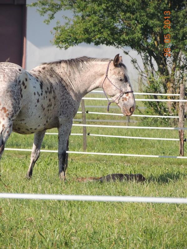 Mes chevaux, un mélange d'un peu tout le monde! - Page 6 Quarin43