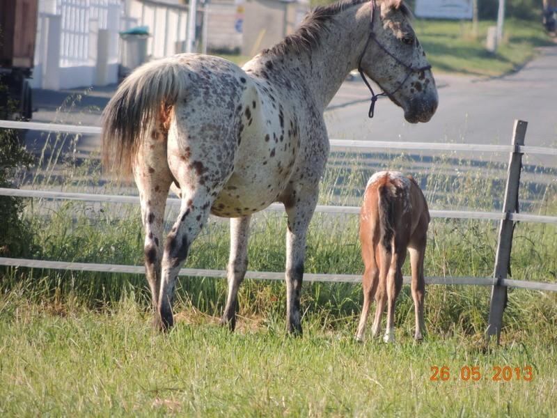 Mes chevaux, un mélange d'un peu tout le monde! - Page 6 Quarin44