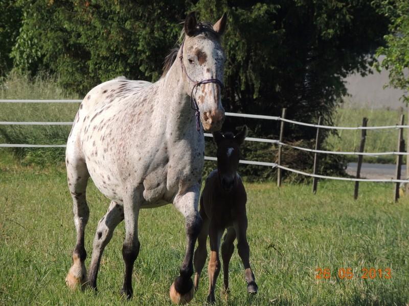 Mes chevaux, un mélange d'un peu tout le monde! - Page 6 Quarin46