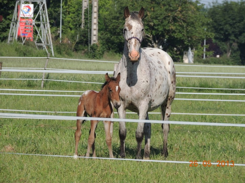 Mes chevaux, un mélange d'un peu tout le monde! - Page 6 Quarin47