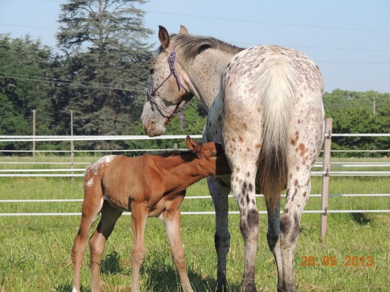 Mes chevaux, un mélange d'un peu tout le monde! - Page 6 Quarin48